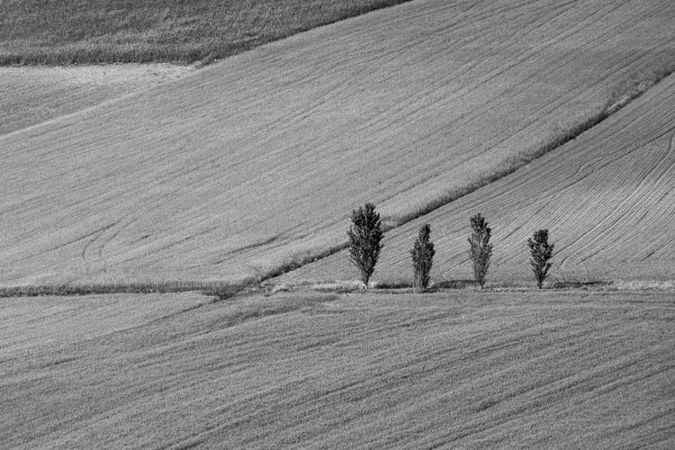 cadastru-teren-agricol-extravilan